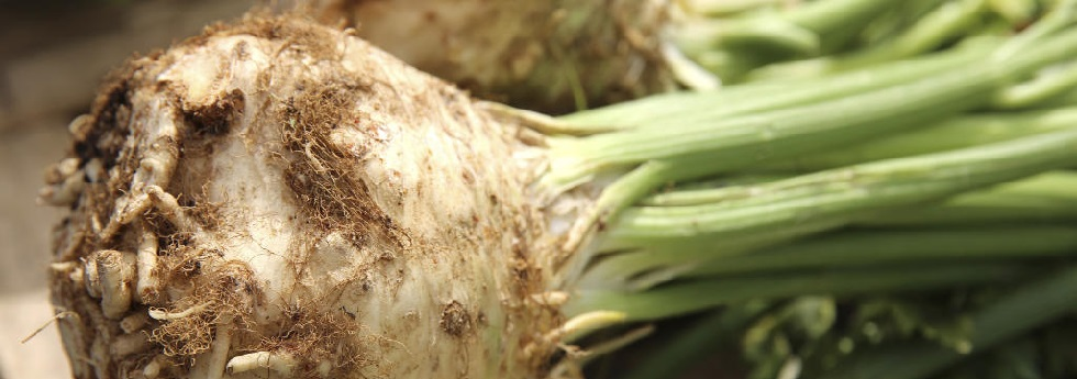 celeriac-category-1.jpg