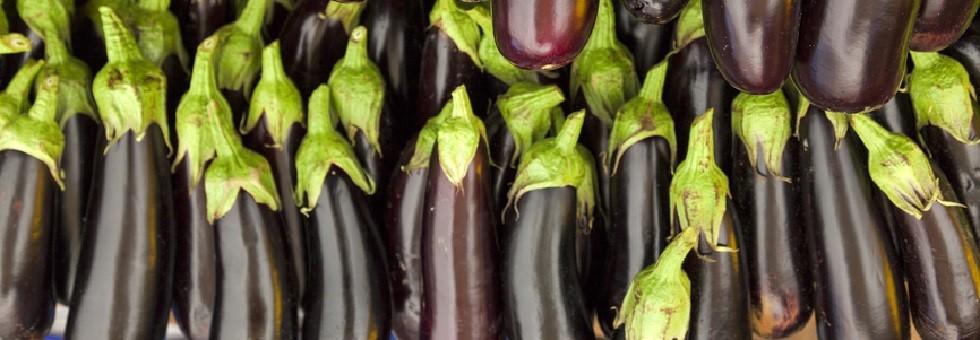 eggplant-category-1.jpg