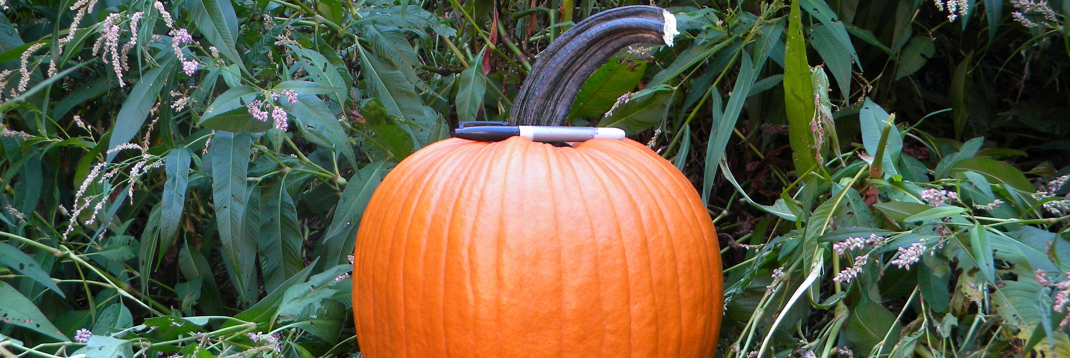 pumpkin-category.jpg