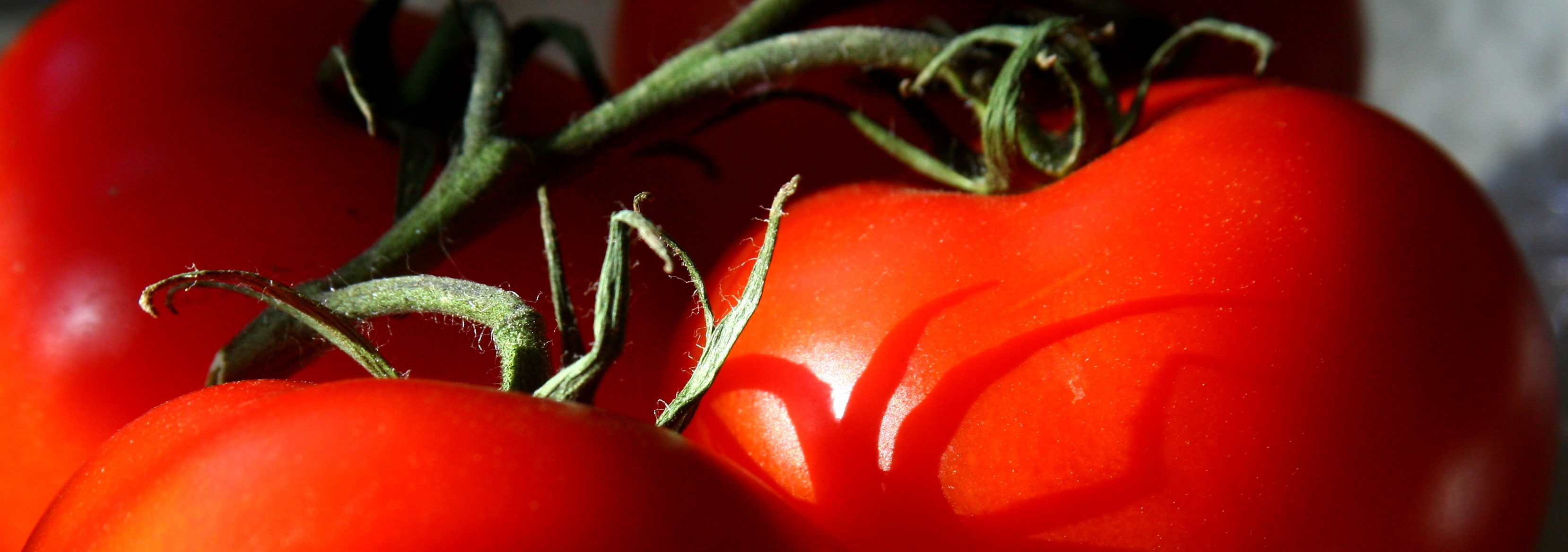 tomatoes-category.jpg