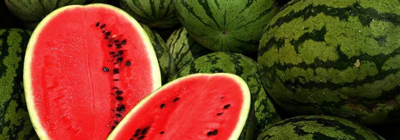 watermelon-category.jpg