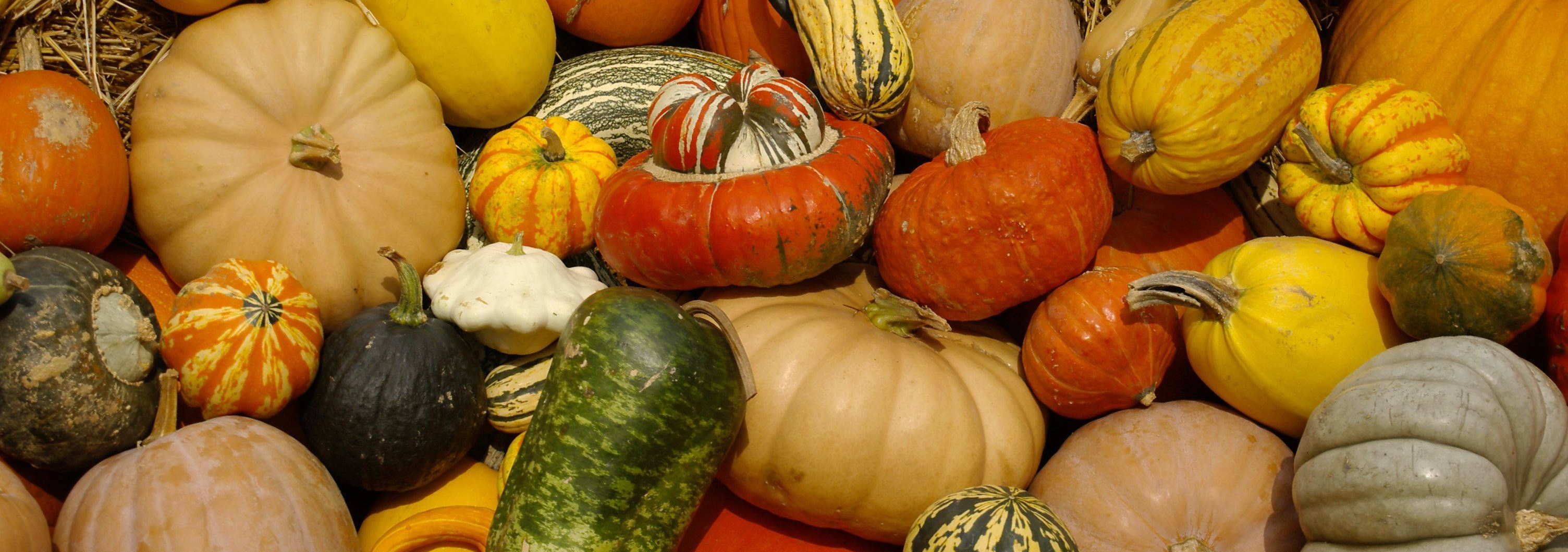 winter-squash-category.jpg